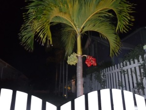 Gorgeous palm tree