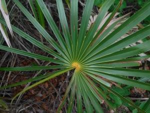 Beautiful palm fronds