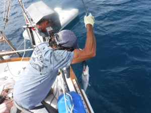 Bill caught another Barracuda but we tossed it back.  These sometimes have Ciguatera.