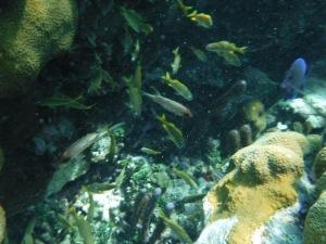 Strange looking fish
