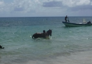 Man swimming with his horse