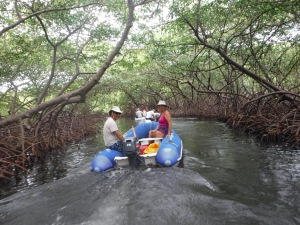 Eight dinghies traveling down the mangrove tunnel