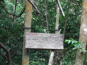Nursery to encourage specific plants in the forest