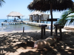The pig enjoys this lunch spot as much as we did!