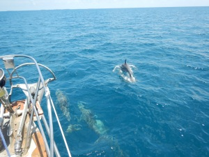 Dolphins were often frolicking along with us