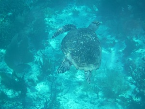 This turtle lured Jenna out to sea