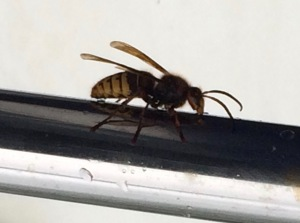 Two inch Bee