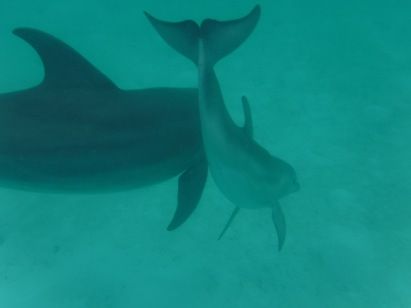 We frolicked with these three dolphins for almost an hour.  They seemed to enjoy swimming with us!